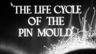The Life Cycle of the Pin Mould thumbnail